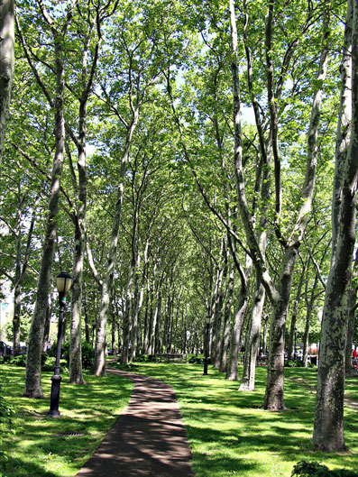 Park NYC