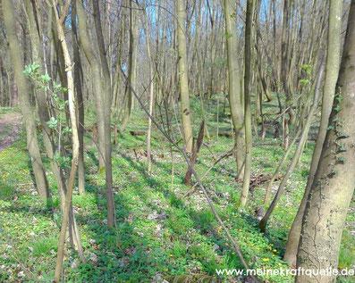 Kraftquelle Wald, Kraftquelle, Flow im Wald, Wald als Energiequelle, Wald erleben, Wald entdecken,