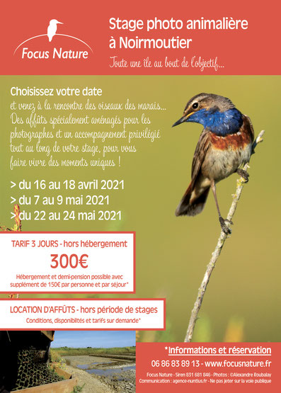 Stage photo nature et animalière 2020 à Noirmoutier par Focus Nature - Alexandre Roubalay