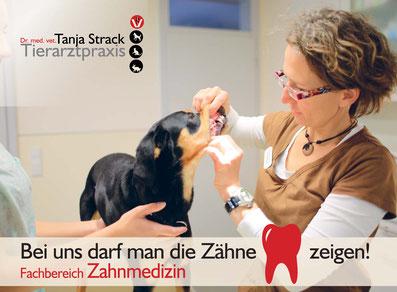 Tierarztpraxis Dr. Tanja Strack - Zahnmedizin