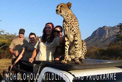 Moholoholo Wildlife Rehab Programme