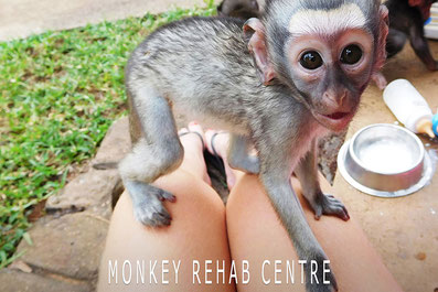 Monkey Rehab Centre