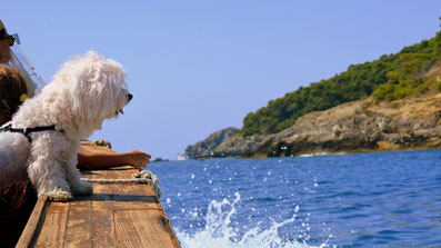 Yachtcharter Adria Kroatien Dalmatien Motoryachten Segelyachten Katamaran Hozyachten