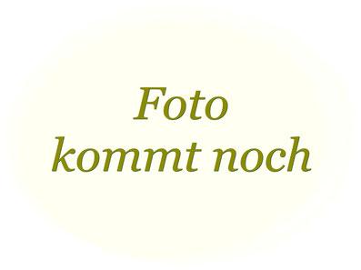 Lanuuk + Fee