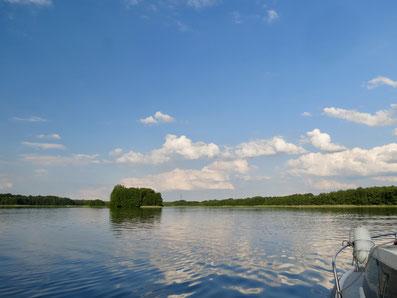 Mecklenburgische Kleinseenplatte, Wangnitzsee, Seeadler