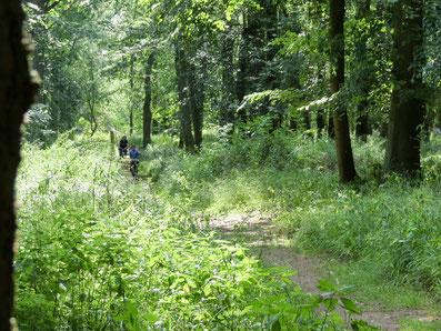 Sommer, Wald, Rad fahren, Mecklenburg, MV
