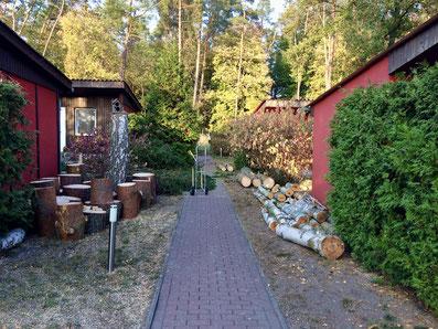 Baumfällung, Birkenholz