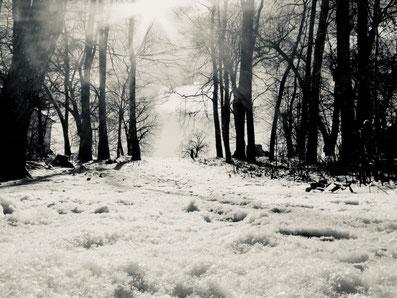 Winterwald, Winter in MV