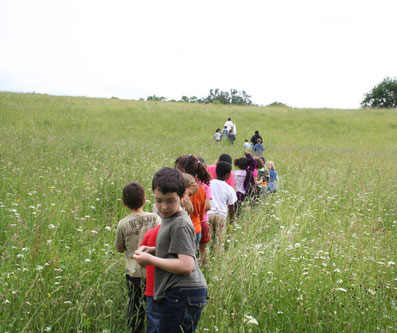Sortie scolaire et entomofaune