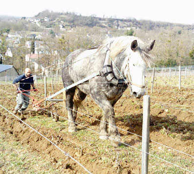 Griffage Traction animale  Cheval Vignes