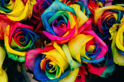 Rosen in den Farben des Regenbogens