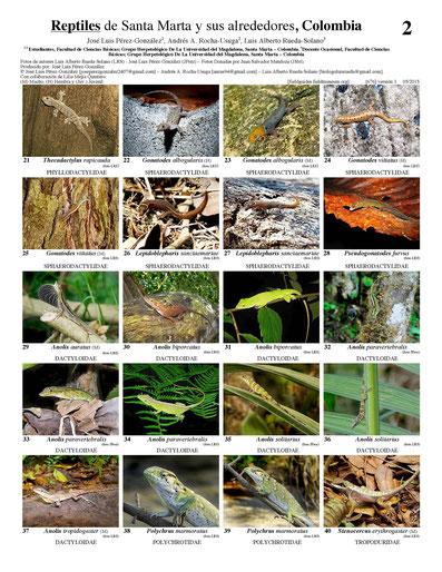 Reptiles de Santa Marta y sus alrededores, Colombia