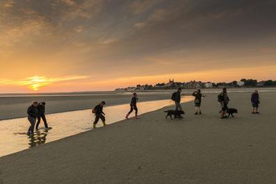 Somme groupes - Agence de voyages - Réceptif - Séjour - Journée - Groupe - Somme - Baie de Somme - Amiens - Randonnée - Baie de somme à pieds - Voir les phoques - Observer les phoques