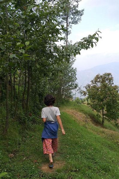 Tee Farm in Nepal