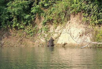 Dieses Krokodil ist ganz langsam ins Wasser geglitten, als wir vorbei fuhren - ein komisches Gefühl
