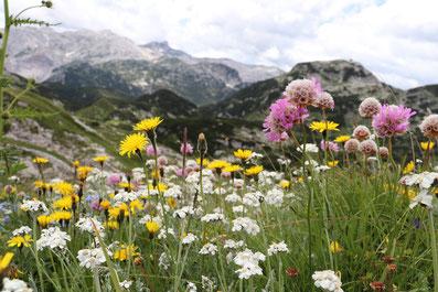 Bergblick Triglav Nationalpark