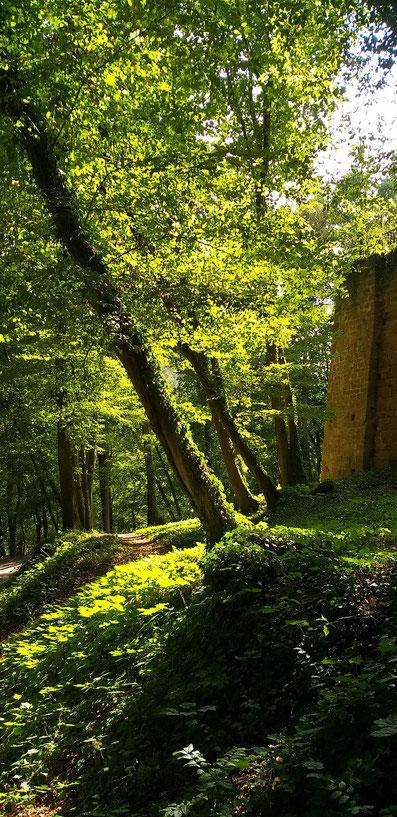 Wald Berwartstein