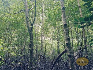 Wald in Thailand