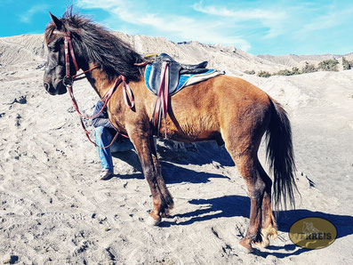 Pferde am Bromo