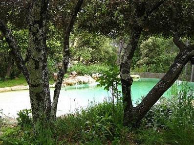 bassin-nature-végétaux