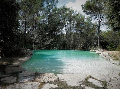piscine-débordement-forêt