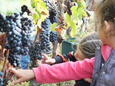 Les vins d'Anjou et les roulottes de la Chevalerie