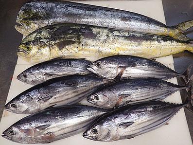 一番美味しい宅配寿司 品川区