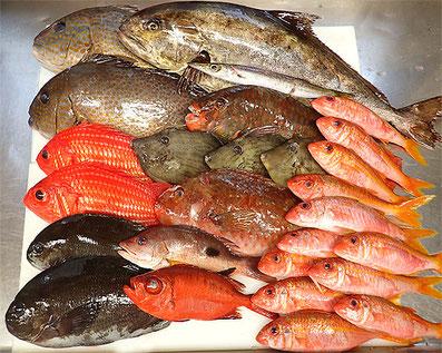 産地直送 天然地魚 黒酢の寿司京山