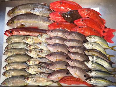 和歌山から届いた天然地魚