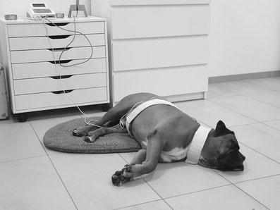 Bioresonanz beim Hund