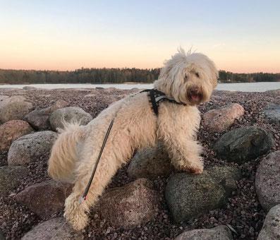 Rutlands FLASH from Australia in Finland