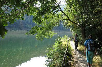 Herzberger Teich: Idyllischer Waldsee bei Goslar