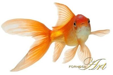Feng Shui Goldfisch-Aquarium