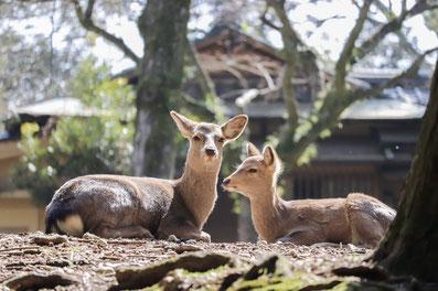 奈良は自然・文化・名産品など色々あるが…