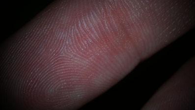 Fingerbeere in der Vergrößerung