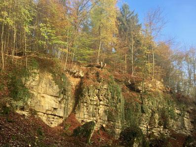 Ein alter Steinbruch am Berg bei Rheinfelden. Standort für wärme liebende Tiere und Pflanzen.