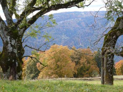 Berge, Wald, Aussicht,  Skihütten und Chalets