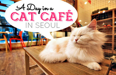 A day in a Cat Cafe in Seoul, South Korea | JustOneWayTicket.com