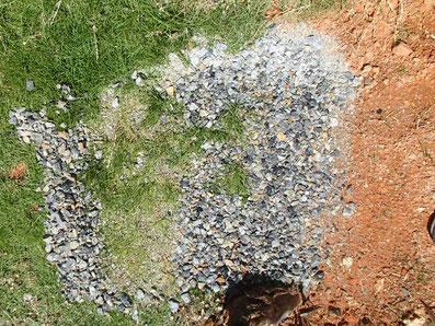 石をずらした後の芝の状態。