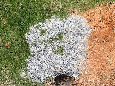 一週間後の芝の状態。芝が伸びている。
