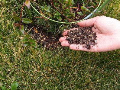 有機肥料として草花に