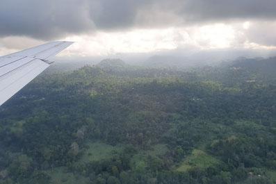 Regenwald von Príncipe