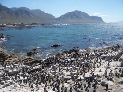 Betty's Bay, Südafrika