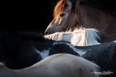 Reitbeteiligung Pferd pflegen Beziehung Fortbildung mit Pferd Coaching mit Pferden therapie Pferdecoaching pferdegestützte Ausbildung Ziel klarheit Beruf Coach Liebe