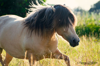 Islandpferde, Coaching, Ausbildung mit Pferd, Pferdekalender Kalender 2018 Krafttier Pferd