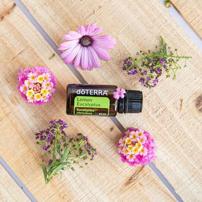 Aroma Welt >> doTERRA Lemon Eucalyptus Öl - Deutsch (Zitronen Eukalyptus): Wirkung, Anwendung, Beratung, Rezepte