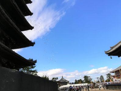 興福寺5兄弟