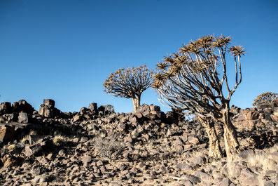 Reisebericht Köcherbaumwald Namibia Mesosaurus Camp
