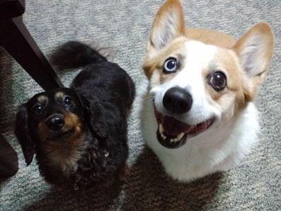 可愛い瞳で見つめてもらえて♡ココ&さくらちゃん♪