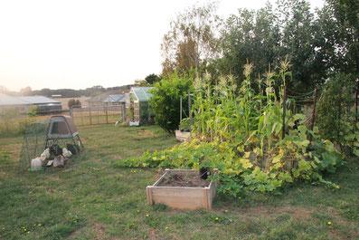 Home edible garden